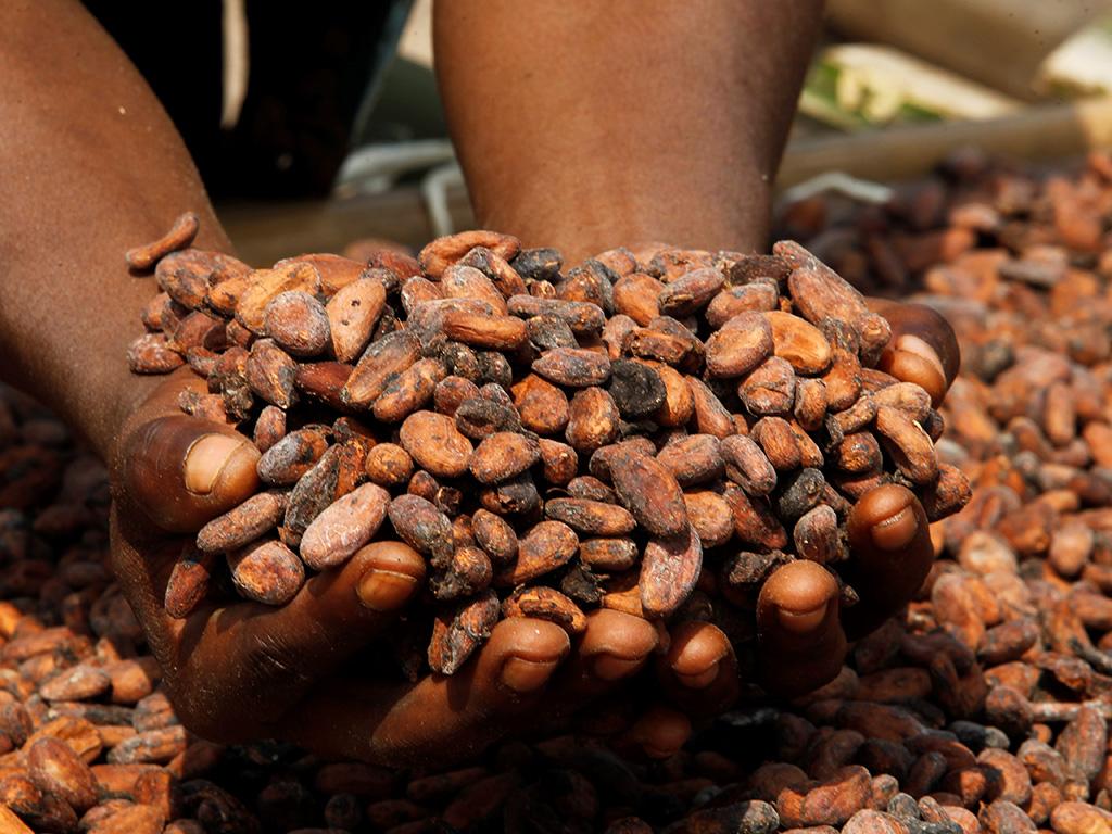 Sweet afFair - Bitterer Kakao und süße Affäre
